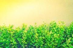 Zielona roślina na ścianie (Filtrujący wizerunek przetwarzający rocznika skutek ) Obraz Royalty Free