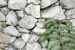Zielona roślina na kamiennej ścianie Obraz Royalty Free
