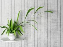 Zielona roślina na półce ilustracji