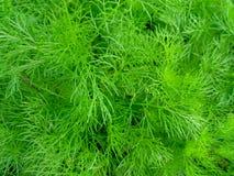 zielona roślina tło Zdjęcie Royalty Free