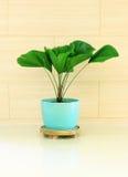 Zielona roślina dekorująca dla pokoju Zdjęcie Royalty Free