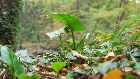 Zielona roślina w drewnach zbiory wideo