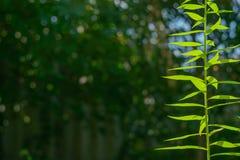 Zielona roślina w ogródzie zdjęcie stock