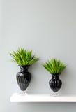Zielona roślina w wazie dekorującej dla pokoju Fotografia Stock