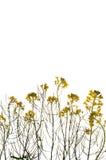 Zielona roślina z żółtymi kwiatami fotografia stock