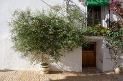 Zielona roślina z białymi kwiatami w garnku zdjęcie stock