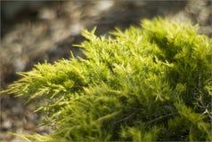 Zielona roślina z jak marzenie tłem Zdjęcia Stock