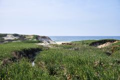 Zielona roślinność nad diunami przed oceanem zdjęcia royalty free