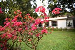 Zielona roślinność towarzysząca domami zdjęcie stock
