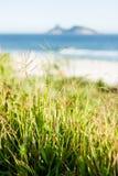 Zielona roślinności trawa przed plażą Obrazy Stock