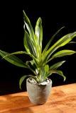 Zielona roślina Obrazy Stock