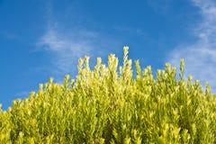 Zielona roślina Zdjęcia Royalty Free