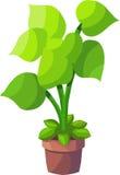 Zielona roślina royalty ilustracja