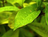 zielona roślina Obraz Royalty Free