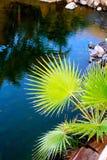ZIELONA roślina los angeles PALMA, CANARIA Obrazy Stock