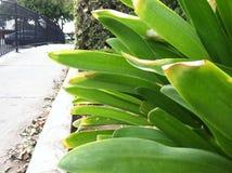 Zielona roślina perfect Fotografia Stock