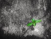 Zielona roślina r na krakingowym betonie Zdjęcie Royalty Free