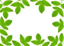 zielona roślina ramowego Fotografia Royalty Free
