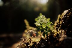 Zielona roślina w górach Zdjęcie Stock