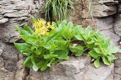 Zielona roślina w skale zdjęcie royalty free