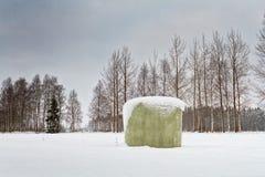 Zielona rolki bela Zakrywająca Z śniegiem Obraz Royalty Free