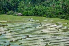 Zielona ryżu pola out wioska Thailand Zdjęcie Royalty Free