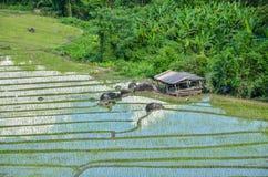 Zielona ryżu pola out wioska Thailand Zdjęcia Royalty Free