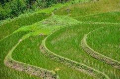Zielona ryżu pola out wioska Thailand Obrazy Royalty Free