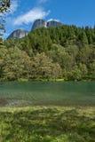 zielona rzeka Obrazy Stock