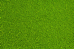 zielona sól Fotografia Stock