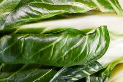 zielona sałata obraz stock
