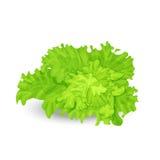 Zielona sałatka Fotografia Stock