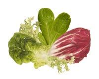 Zielona sałatka Obraz Stock
