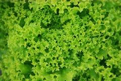 Zielona sałaty sałatka w ceramicznym pucharze fotografia royalty free