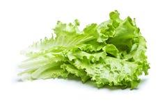 zielona sałata Zdjęcie Stock
