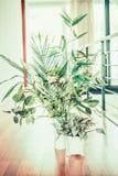 Zielona salowej rośliny dekoracja w biel wazie i garnkach Zdjęcia Royalty Free