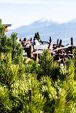 Zielona sosna w wysokich Tatrzańskich górach w Zakopane, Polska. Obrazy Royalty Free