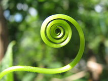 zielona spirala Obrazy Stock