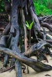 zielona sprout Obrazy Stock