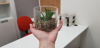 Zielona sztuczna tłustoszowata roślina w przejrzystym klingerycie może na ludzkiej ręce obraz stock