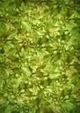 zielona tło roślina Zdjęcie Stock