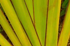 zielona tło roślina Zdjęcia Royalty Free