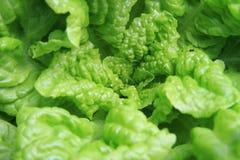 zielona tło sałata Zdjęcia Royalty Free