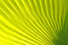 zielona tła natury Obrazy Royalty Free