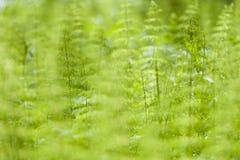 zielona tła natury Obraz Stock
