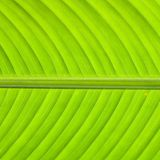 zielona tekstura Fotografia Stock