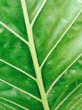 Zielona tekstura i tło Zdjęcia Royalty Free