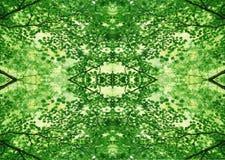 Zielona tekstura   Kwiecisty wzór   Projekta element   Textured tło obraz royalty free