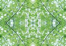 Zielona tekstura   Kwiecisty wzór   Projekta element   Textured tło obrazy royalty free