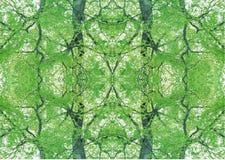 Zielona tekstura   Kwiecisty wzór   Projekta element   Textured tło zdjęcia royalty free